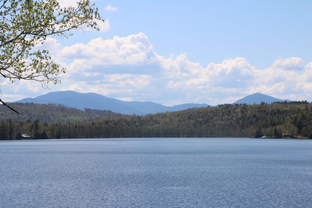 A view of forest lake