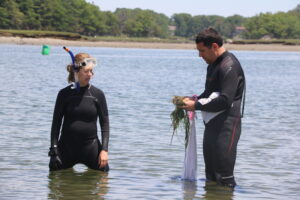 Two scientists in wetsuits stand at knee depth in an estuary while transplanting eelgrass