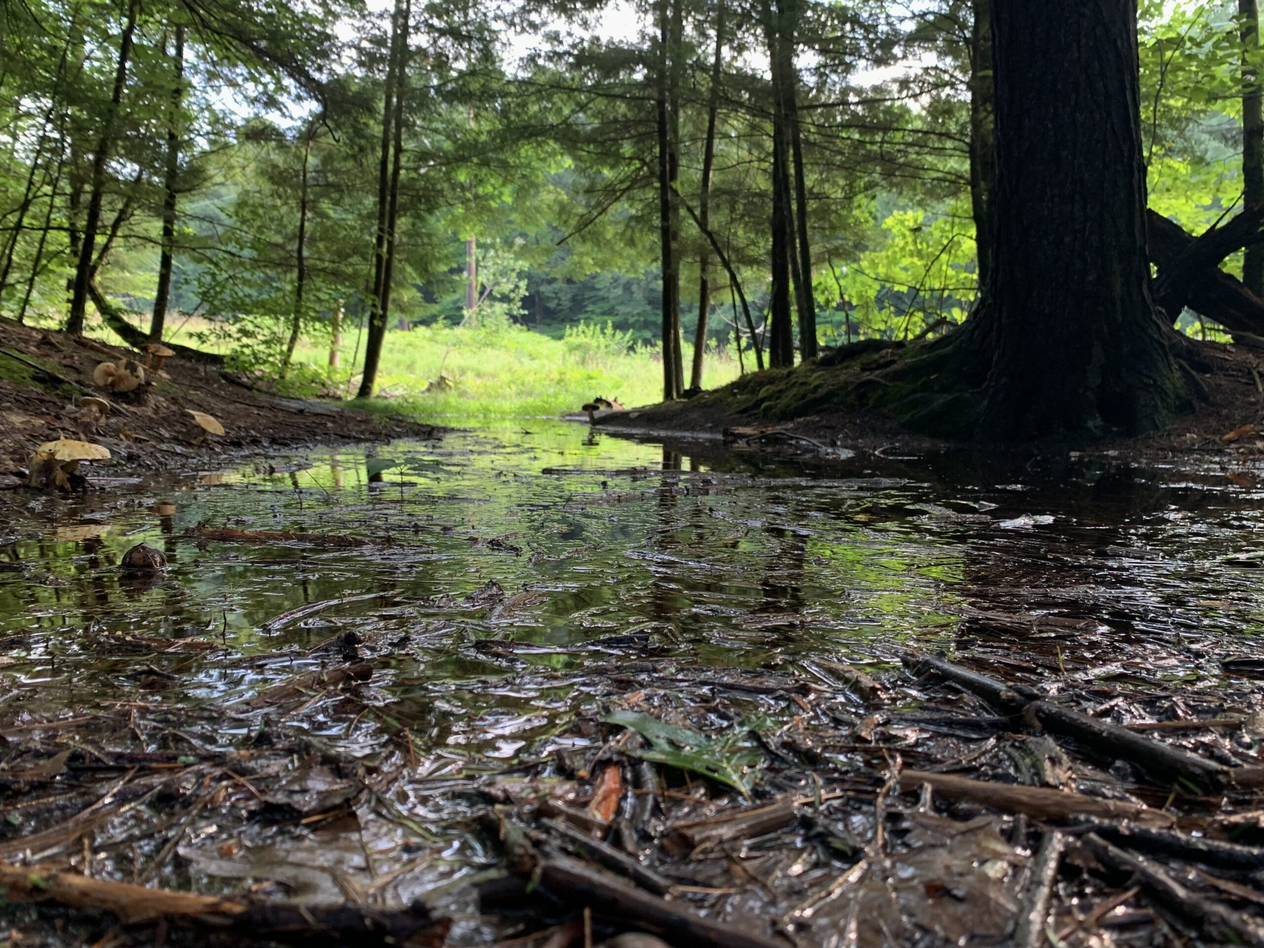Despite the rain, drought concerns linger: 'We're not out of the woods yet'