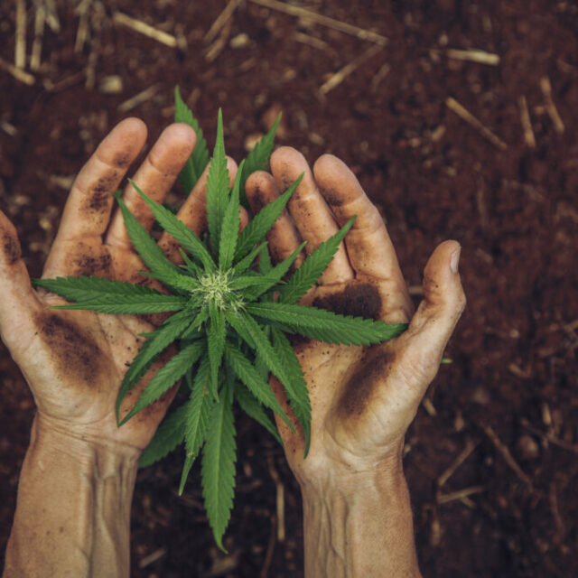 State's medicinal marijuana industry has stabilized, but barriers to growth remain