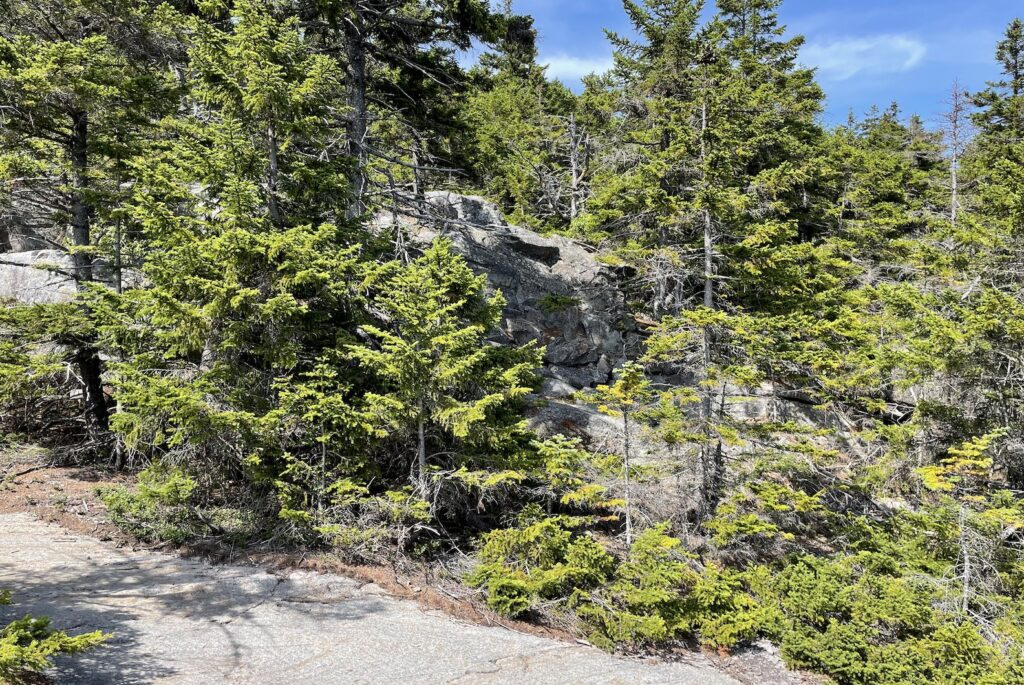 Trees and rocks on a hiking trail