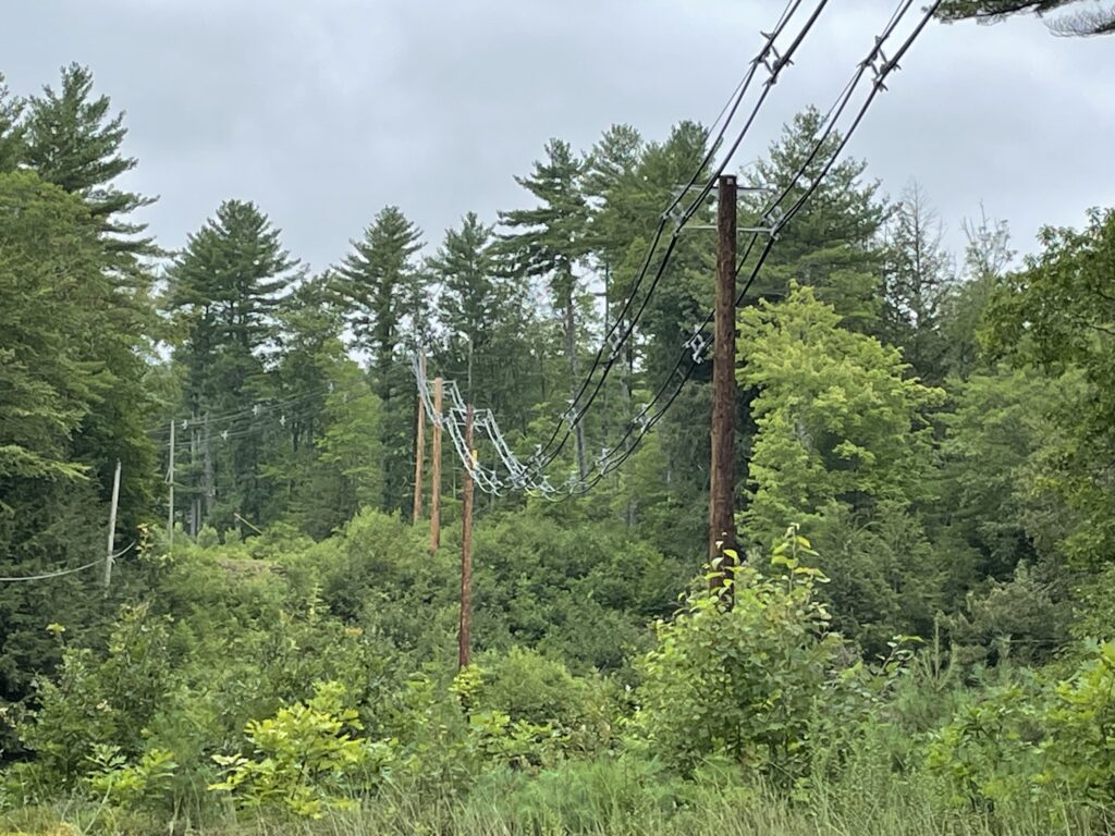 Power lines and green trees