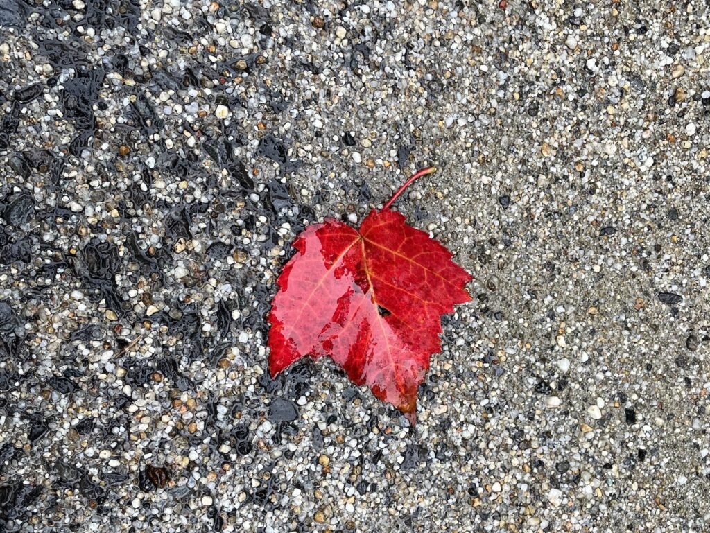A red leaf on damp earth